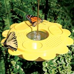 Butterfly Feeder w/ Butterfly Nectar - Dishwasher Safe & Holds 12 Fluent Oz. (1)